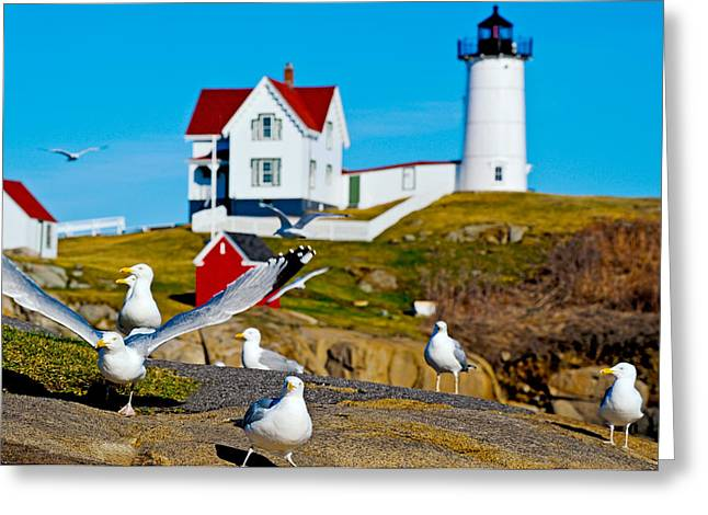Cape Neddick Lighthouse Greeting Cards - Seagulls At Nubble Lighthouse, Cape Greeting Card by Panoramic Images