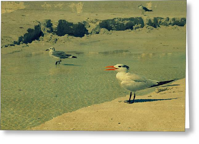 Coastal Decor Digital Greeting Cards - Seagulls at the Beach II Greeting Card by Patricia Awapara