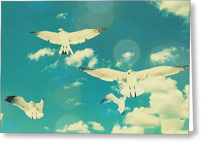 Recently Sold -  - Commercial Photography Greeting Cards - Seagulls at the Beach Greeting Card by Patricia Awapara