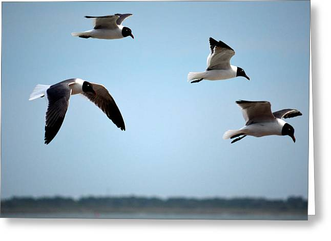 Recently Sold -  - Flying Seagull Greeting Cards - Seagulls in flight Greeting Card by Jerry Gatewood