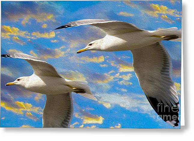 Flying Seagull Greeting Cards - Seagulls in Flight Greeting Card by Jon Neidert