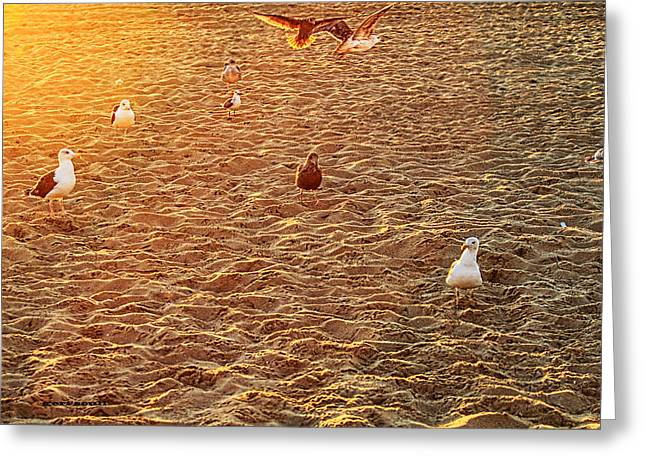 Recently Sold -  - Surfing Magazine Greeting Cards - Seagulls in sunrise Greeting Card by Geraldine Scull