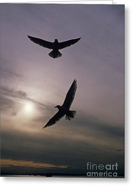 Flying Seagull Greeting Cards - Seagulls Greeting Card by Jim Corwin