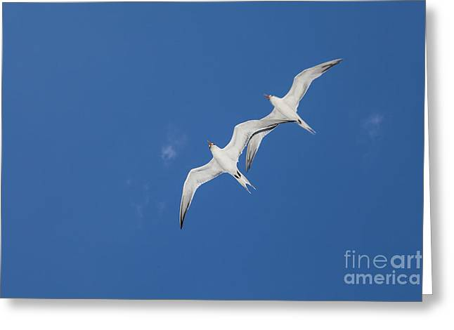 Flying Animal Greeting Cards - Seagulls Greeting Card by Juan  Silva