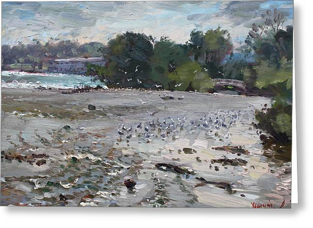 Seagull Reflection Greeting Cards - Seagulls on Niagara River Greeting Card by Ylli Haruni