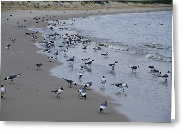 Seagull On Beach Greeting Cards - Seagulls on the Delaware Bay Greeting Card by Bill Cannon