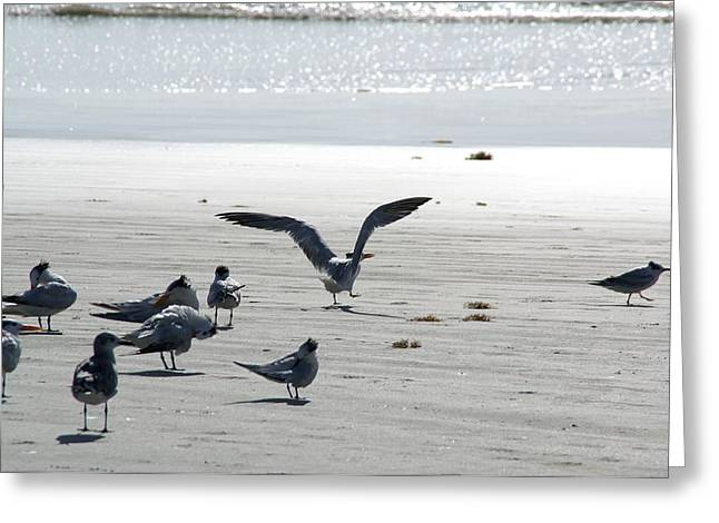 Seagulls On The Sand Greeting Cards - Seagulls on the Seashore Greeting Card by Patricia Twardzik