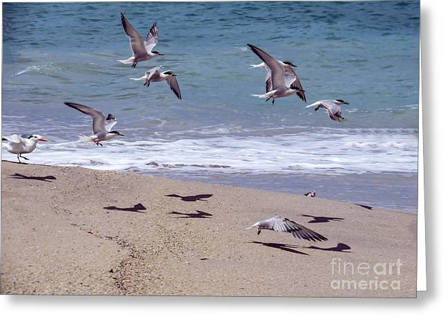 Seagulls On The Wing Greeting Card by Zina Stromberg