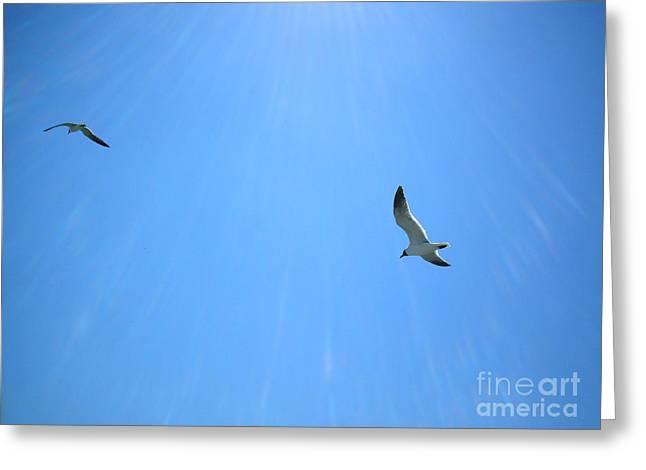 Galveston Greeting Cards - Seagulls soar Greeting Card by Audrey Van Tassell