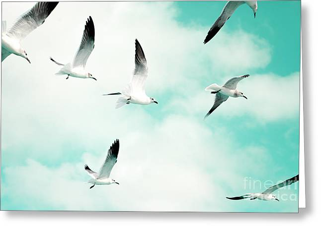 Photos Of Birds Greeting Cards - Seagulls Soaring Greeting Card by Kim Fearheiley