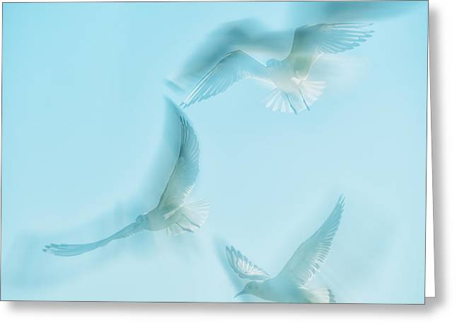 Seabirds Photographs Greeting Cards - Seagulls  Greeting Card by Stylianos Kleanthous