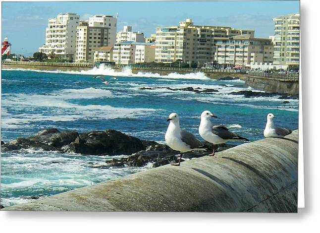 Geobob Greeting Cards - Seagulls Surf Rocky Shoreline Three Anchor Bay Cape Town South Africa Greeting Card by Robert Ford