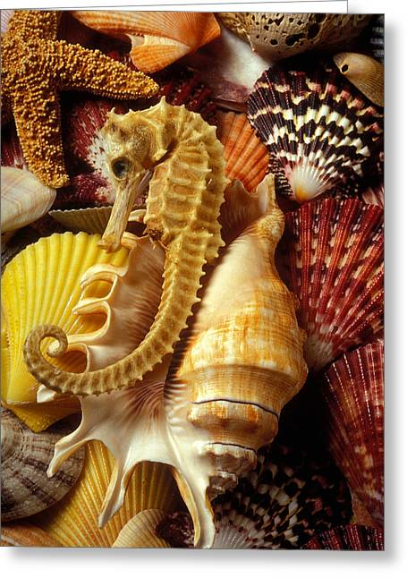 Shell Texture Greeting Cards - Seahorse among sea shells Greeting Card by Garry Gay