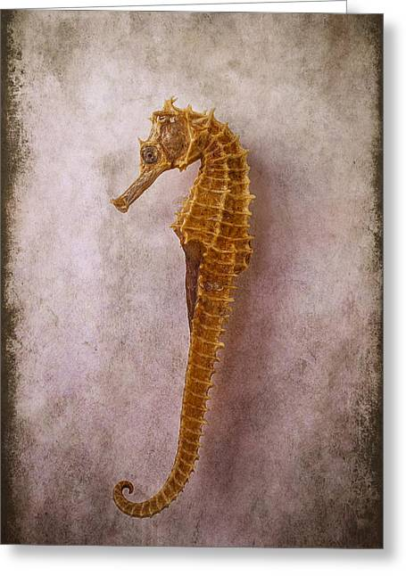 Shell Texture Greeting Cards - Seahorse Still Life Greeting Card by Garry Gay