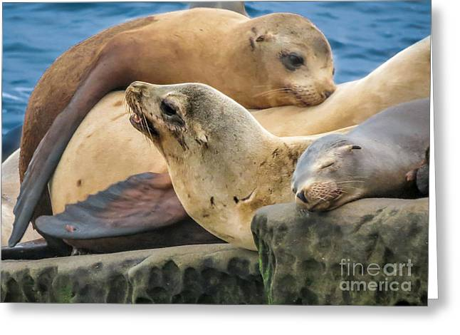 California Sea Lions Greeting Cards - Seal Colony Greeting Card by Darleen Stry