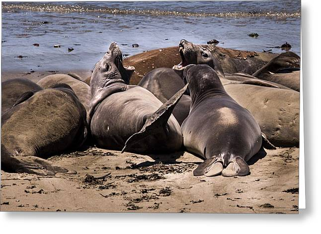 Big Sur Ca Greeting Cards - Seal Team 3 By Denise Dube Greeting Card by Denise Dube
