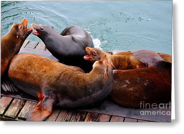 Sea Greeting Cards - Seal vs Sea Lions Greeting Card by Mandy Judson