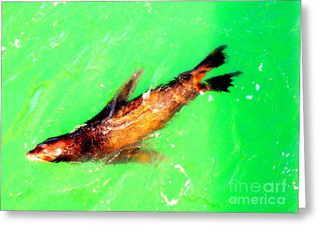 Sea Lions Mixed Media Greeting Cards - Sealoin  Greeting Card by Loretta Bueno