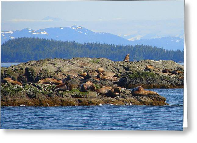 Stream Greeting Cards - Seals 2 Greeting Card by Lew Davis