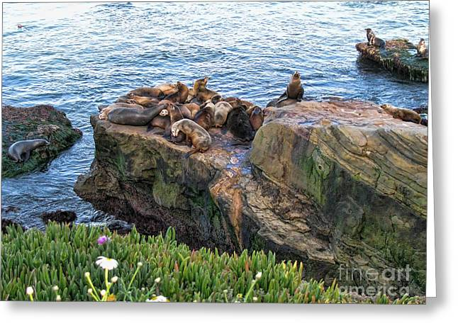 Sea Lions Digital Art Greeting Cards - Seals And Pups Greeting Card by Bedros Awak