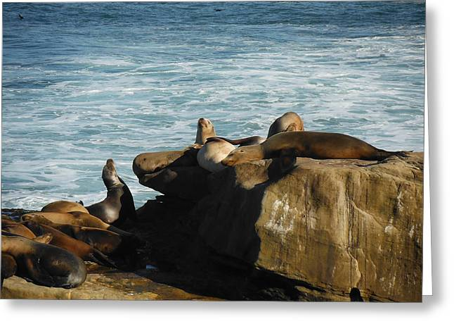 California Beach Greeting Cards - Seals at rest Greeting Card by April Antonia