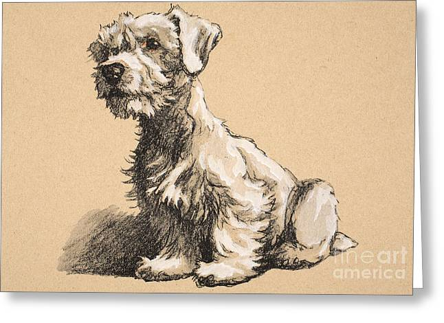 Doggy Pastels Greeting Cards - Sealyham Greeting Card by Cecil Charles Windsor Aldin