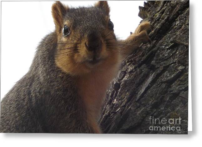 Fur Pyrography Greeting Cards - Searching Greeting Card by Dan Seeley