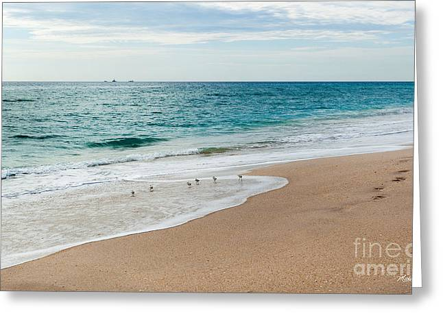 Bird Footprints In The Sand Greeting Cards - Searching Greeting Card by Michelle Wiarda