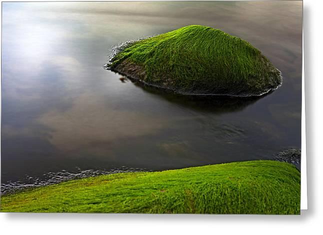 seascape seaweed on rocks Greeting Card by Dirk Ercken