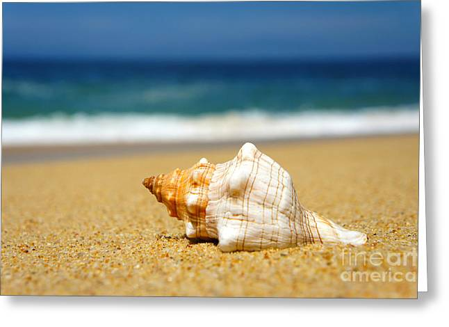 Warm Summer Greeting Cards - Seashell Greeting Card by Aged Pixel