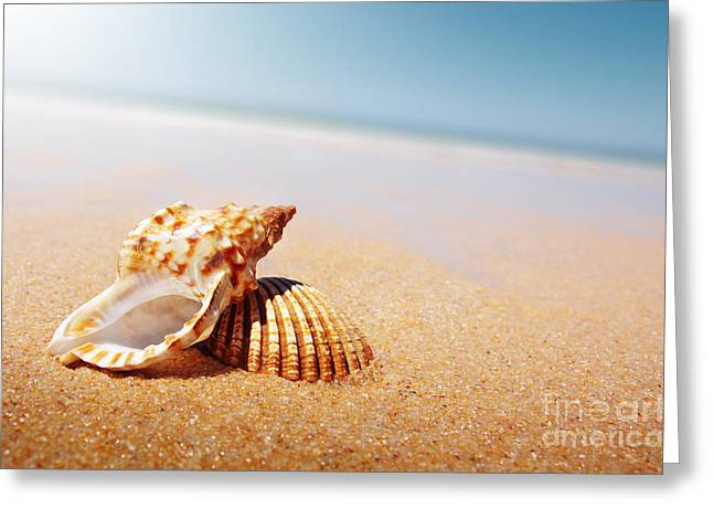Golden Sand Greeting Cards - Seashell and Conch Greeting Card by Carlos Caetano