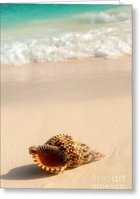 Ocean Shore Greeting Cards - Seashell and ocean wave Greeting Card by Elena Elisseeva