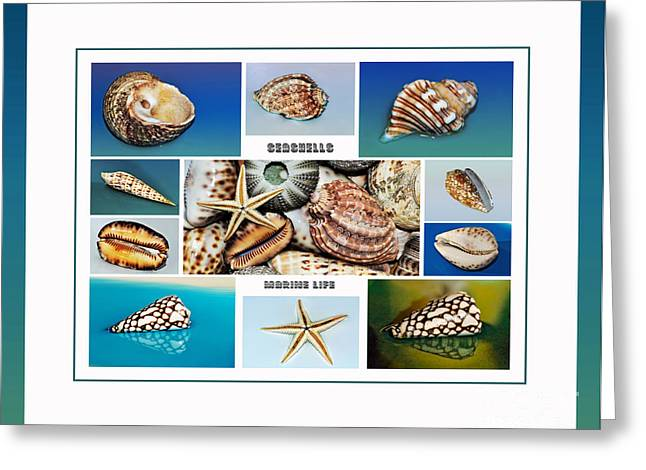 Star Fish Greeting Cards - Seashell Collection 4 - Collage Greeting Card by Kaye Menner