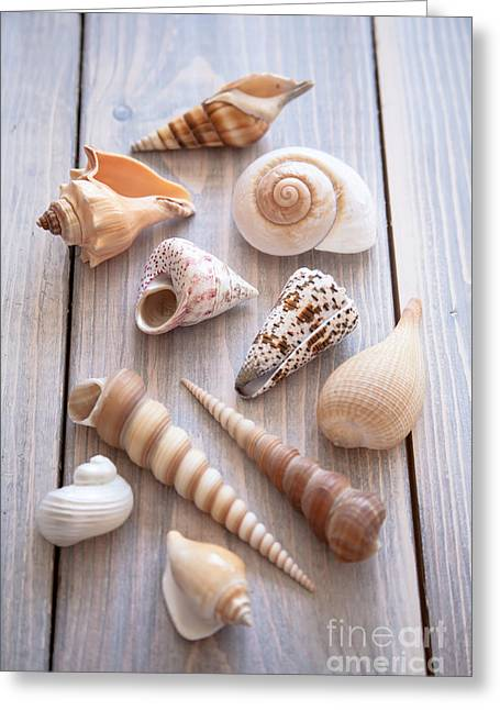 Coastal Decor Photographs Greeting Cards - Seashell Collection Greeting Card by Jan Bickerton