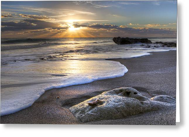 Recently Sold -  - Ocean. Reflection Greeting Cards - Seashell Greeting Card by Debra and Dave Vanderlaan