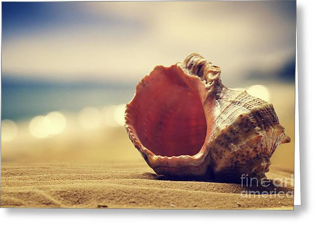 Space Pyrography Greeting Cards - 	Seashell in the sand  Greeting Card by Jelena Jovanovic