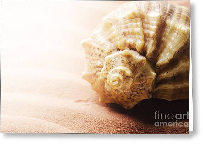 Space Pyrography Greeting Cards - Seashell Greeting Card by Jelena Jovanovic