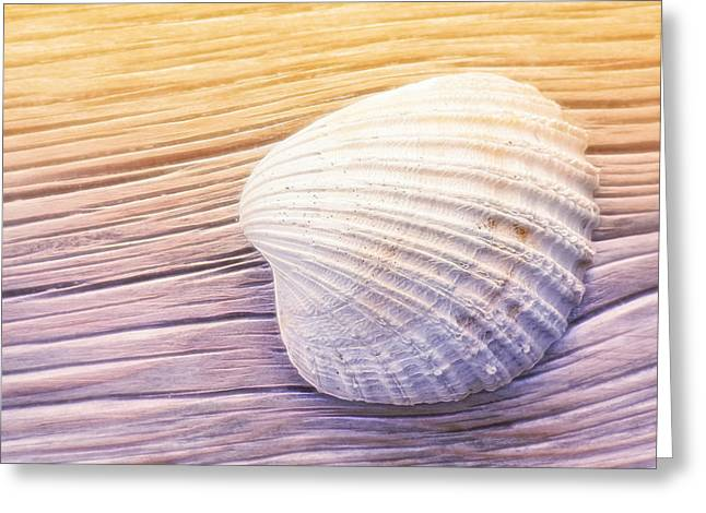 Lutz Baar Greeting Cards - Seashell Greeting Card by Lutz Baar