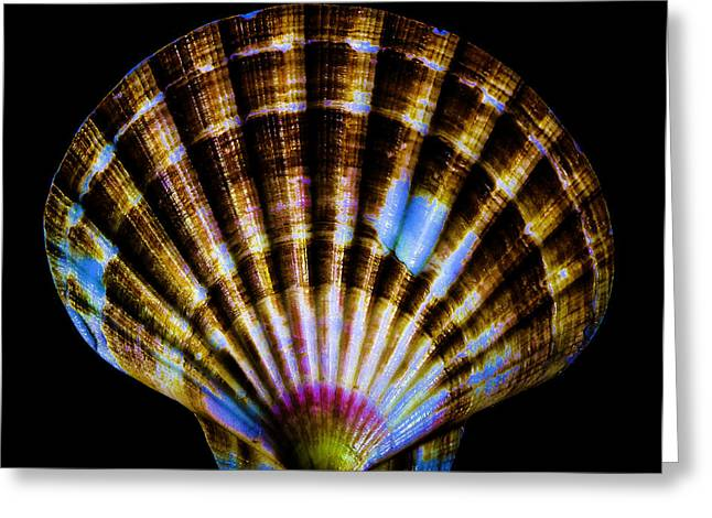 D�cor Greeting Cards - Seashell Greeting Card by Mitch Shindelbower