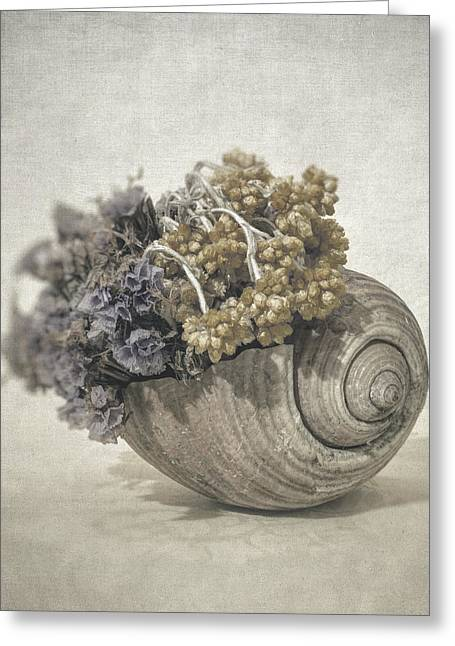 Depth Of Field Greeting Cards - Seashell nO.2 Greeting Card by Taylan Soyturk