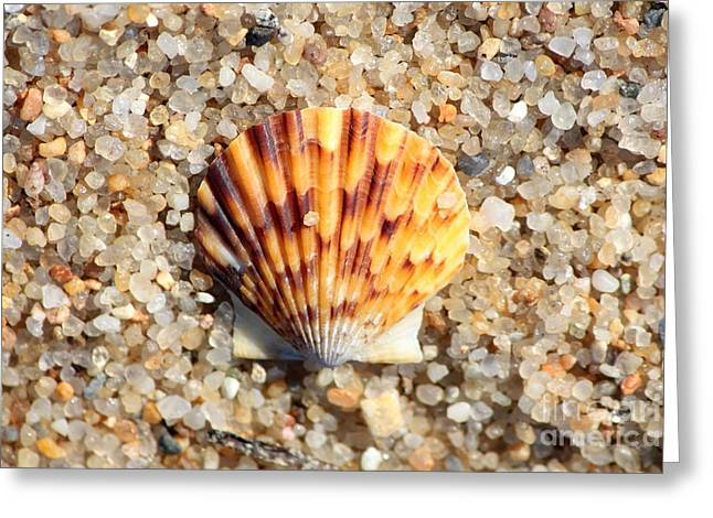 Agate Beach Greeting Cards - Seashell on Sandy Beach Greeting Card by Carol Groenen