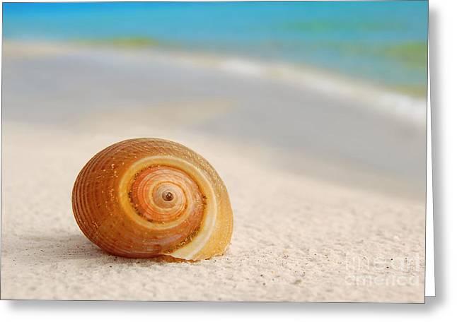 Florida Panhandle Digital Art Greeting Cards - Seashell on Seashore Greeting Card by Cheryl Casey