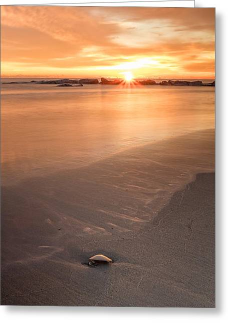 Hamptons Greeting Cards - Seashell On The Shore At Sunrise Greeting Card by Jeff Sinon