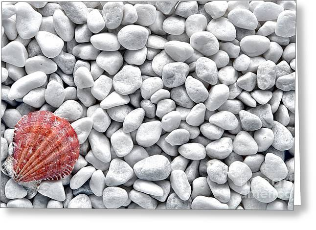 Sea Shore Greeting Cards - Seashell on White Pebbles Greeting Card by Olivier Le Queinec