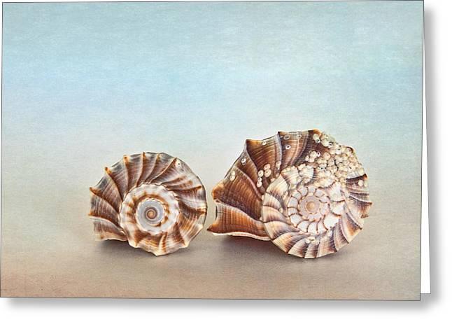 Seashell Patterns Greeting Card by David and Carol Kelly