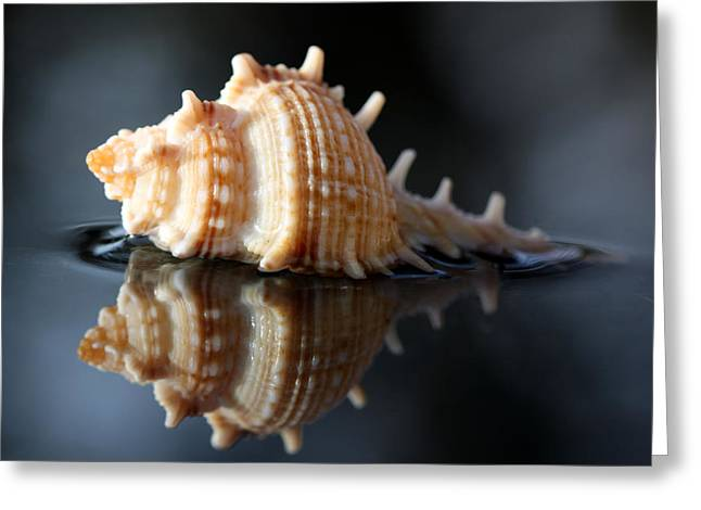 Aquatic Greeting Cards - Seashell reflection Greeting Card by Barb Gabay