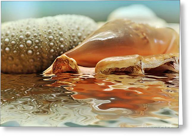 Seashell Reflections on Water Greeting Card by Kaye Menner