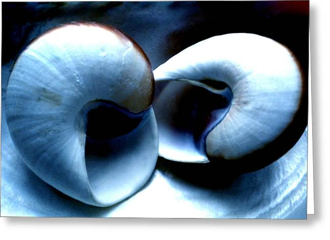 Canvasprint Greeting Cards - Seashell Rest Greeting Card by Colette V Hera  Guggenheim