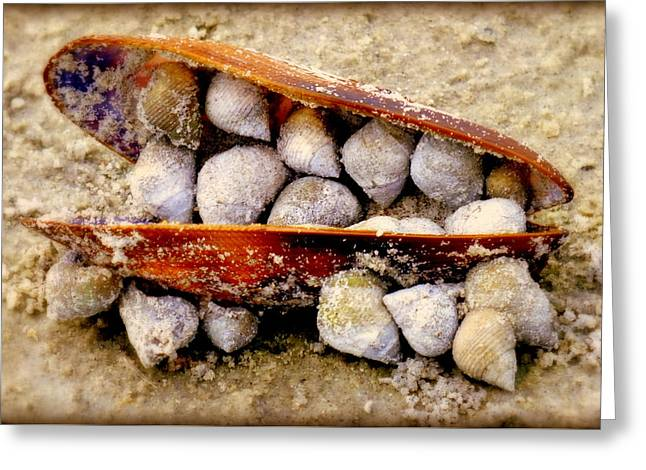 Shell Texture Greeting Cards - Seashell Reunion Greeting Card by Karen Wiles