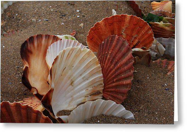 Shell Fish Greeting Cards - Seashell Sail Greeting Card by Aidan Moran